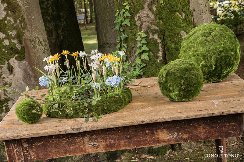 Chestnut Moss