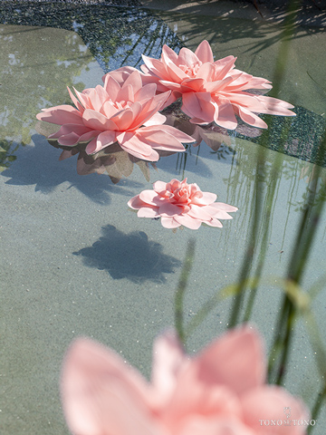 Un giardino d' acqua